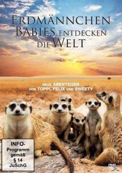 Erdmännchen Babies entdecken die Welt