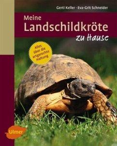 Meine Landschildkröte zu Hause - Keller, Gerti; Schneider, Eva-Grit