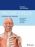 LernPoster der Anatomie, Knochen und Muskeln, 2 Poster / Prometheus