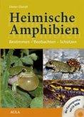 Heimische Amphibien