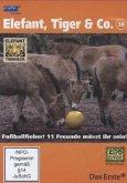 Elefant, Tiger & Co. - Fußballfieber! Elf Freunde müsst ihr sein!, 1 DVD