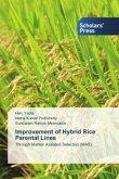Improvement of Hybrid Rice Parental Lines