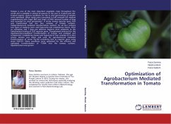 Optimization of Agrobacterium Mediated Transformation in Tomato