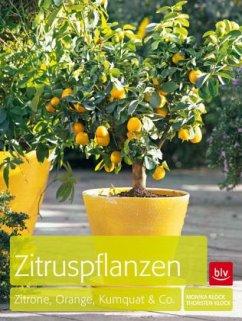 Zitruspflanzen (Mängelexemplar)