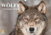 Wölfe. Verwegene Anmut (Wandkalender immerwährend DIN A3 quer)