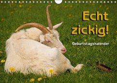 Echt zickig! / Geburtstagskalender (Wandkalender immerwährend DIN A4 quer)