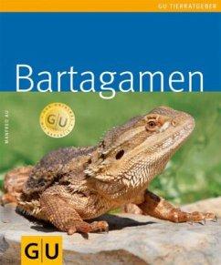 Bartagamen (Mängelexemplar)