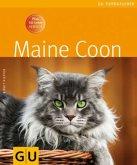 Maine Coon (Mängelexemplar)