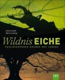 Wildnis Eiche
