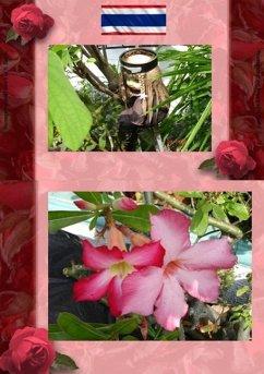 Thai Blumen und Pfanzen Photobuch von Heinz Duthel (eBook, ePUB)