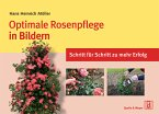 Optimale Rosenpflege in Bildern