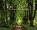 Unter Baumkronen - Die schönsten Alleen Deutschlands 2016