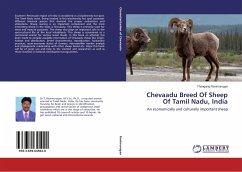 Chevaadu Breed Of Sheep Of Tamil Nadu, India