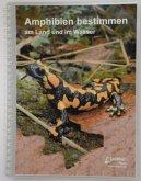 Amphibien bestimmen - am Land und im Wasser