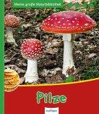 Pilze / Meine große Naturbibliothek