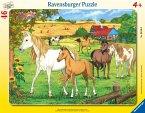 Ravensburger 06646 - Pferde auf der Koppel, Rahmenpuzzle, 46 Teile