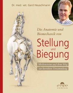 Die Anatomie und Biomechanik von Stellung und Biegung - Heuschmann, Gerd