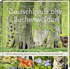 Deutschlands alte Buchenwälder - Engel, Karl-Heinz