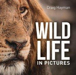 Wildlife in Pictures - Hayman, Craig