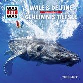 WAS IST WAS Hörspiel: Wale & Delfine/ Geheimnisse der Tiefsee (MP3-Download)
