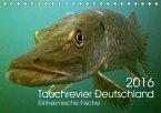 Tauchrevier Deutschland (Tischkalender 2016 DIN A5 quer)