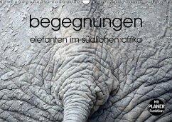 begegnungen - elefanten im südlichen afrika (Wandkalender immerwährend DIN A3 quer)