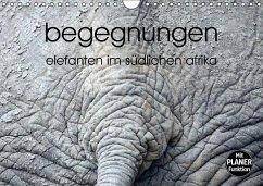 begegnungen - elefanten im südlichen afrika (Wandkalender immerwährend DIN A4 quer)