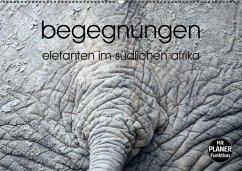 begegnungen - elefanten im südlichen afrika (Wandkalender immerwährend DIN A2 quer)