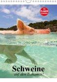 Schweine auf den Bahamas! (Wandkalender 2016 DIN A4 hoch)
