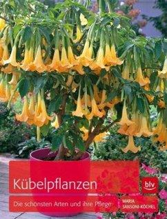 Kübelpflanzen (Mängelexemplar) - Sansoni-Köchel, Maria