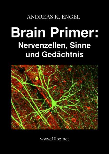 Brain Primer: Nervenzellen, Sinne und Gedächtnis (eBook, ePUB) - Engel, Andreas K.