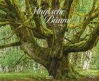 Magische Bäume 2017 PhotoArt Kalender