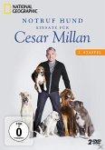 Notruf Hund - Einsatz für Cesar Millan: 2. Staffel (2 Discs)