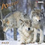 Wolves 2017 What a Wonderful World