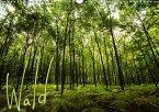 Wald (Wandkalender 2017 DIN A3 quer)