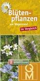 Blütenpflanzen am Wegesrand