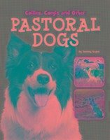 Collies, Corgis and Other Pastoral Dogs - Gagne, Tammy