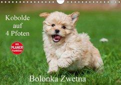 9783665379292 - Sigrid Starick: Kobolde auf 4 Pfoten - Bolonka Zwetna (Wandkalender 2017 DIN A4 quer): Lassen Sie sich verzaubern von einer entzückenden Hundefamilie (Geburtstagskalender, 14 Seiten ) - Book