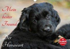 9783665379469 - Starick, Sigrid: Mein bester Freund - Der Hovawart (Wandkalender 2017 DIN A3 quer) - Book