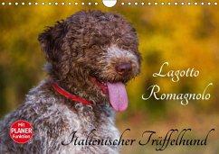 9783665379698 - Starick, Sigrid: Lagotto Romagnolo - Italienischer Trüffelhund (Wandkalender 2017 DIN A4 quer) - Book