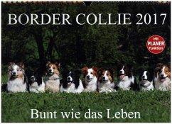 9783665379254 - Starick, Sigrid: Border Collie 2017 (Wandkalender 2017 DIN A4 quer) - Book