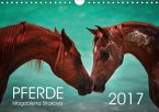 Pferde - Magdalena Strakova (Wandkalender 2017 DIN A4 quer)