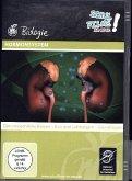 Hormonsystem, 1 DVD