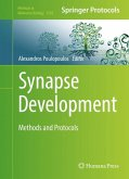 Synapse Development