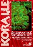 Grosspolypige Steinkorallen im Meerwasseraquarium (eBook, ePUB)