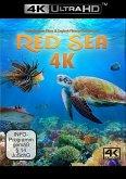 Red Sea (4K Ultra HD)