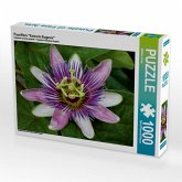 "Passiflora ""Kaiserin Eugenie"" (Puzzle)"
