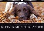 Faszination Jagdhund - Kleiner Münsterländer (Wandkalender 2017 DIN A3 quer)