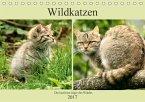 Wildkatzen - Die lautlosen Jäger des Waldes (Tischkalender 2017 DIN A5 quer)