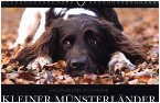 Faszination Jagdhund - Kleiner Münsterländer (Wandkalender 2017 DIN A4 quer)